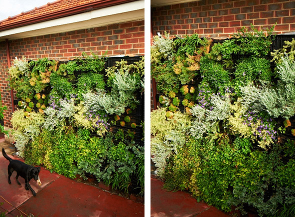 Vertical Gardens Sustainable Outdoors