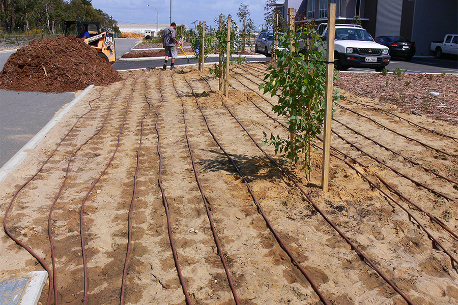 Bibra Lake commercial precinct native landscaping