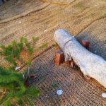 Jute matting, planting and logs used to prevent erosion